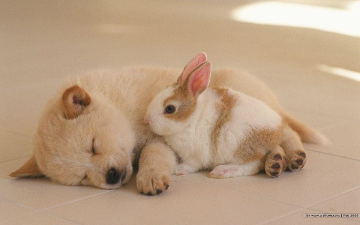 1440*900 Lovely Puppy wallpapers / Lovely Puppies Photos 1440×900 …