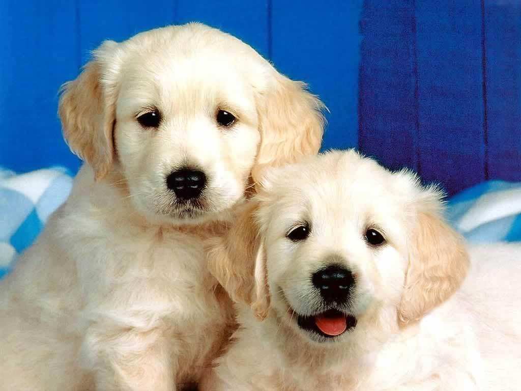 Puppies! <3 – Dogs Wallpaper (1993812) – Fanpop