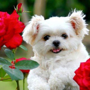download Puppies Wallpapers   Inspire Kids