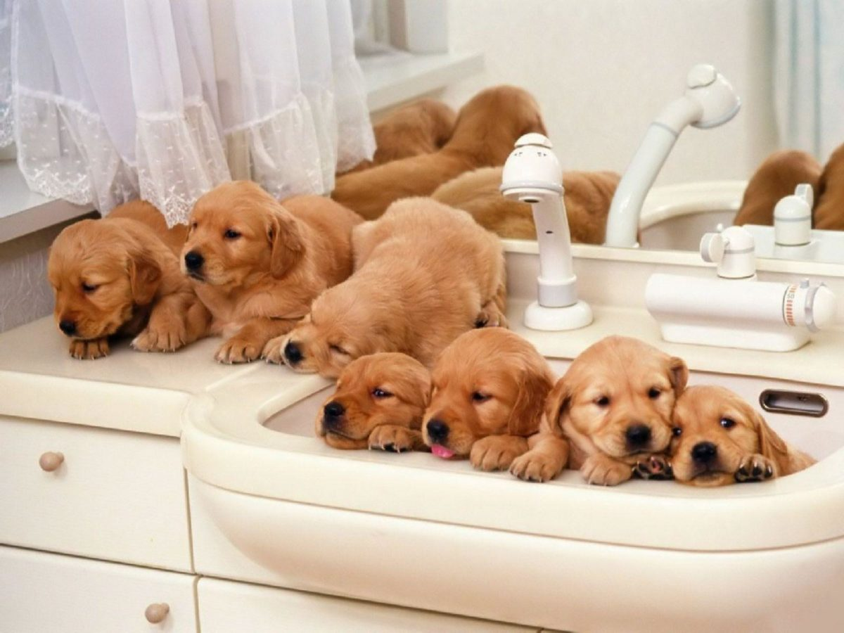 puppies wallpaper for desktop | Funny pictures photos,funny jokes …