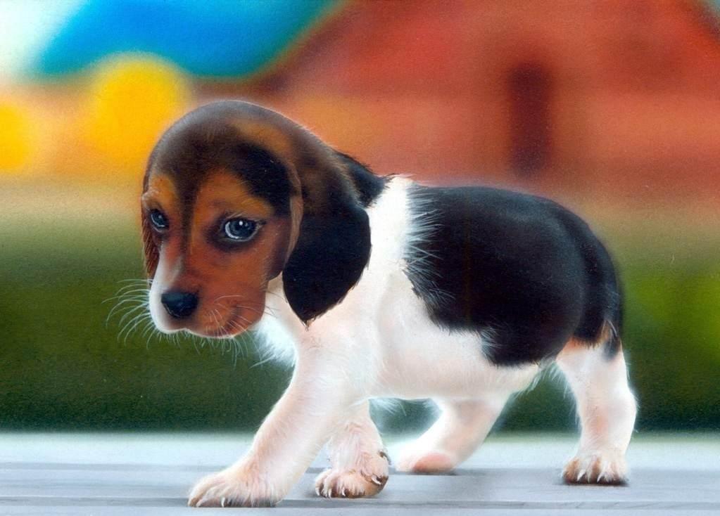 Beagle Puppy Wallpaper | Customity