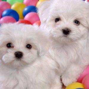 download Puppies Dog Wallpaper Fullscreen Windows #10630 Wallpaper | Cool …