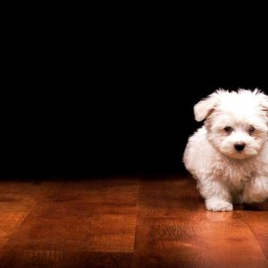 download Wallpapers For > Cute Black Puppies Wallpaper