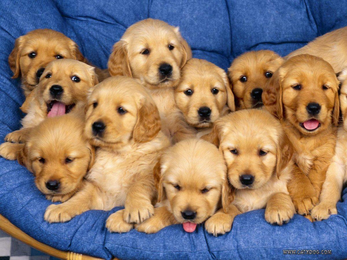 Aaaaaawwwwwwwwww Sweet !! – Puppies Wallpaper (9415255) – Fanpop