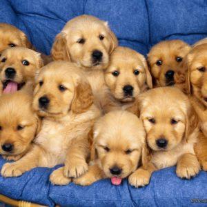 download Aaaaaawwwwwwwwww Sweet !! – Puppies Wallpaper (9415255) – Fanpop