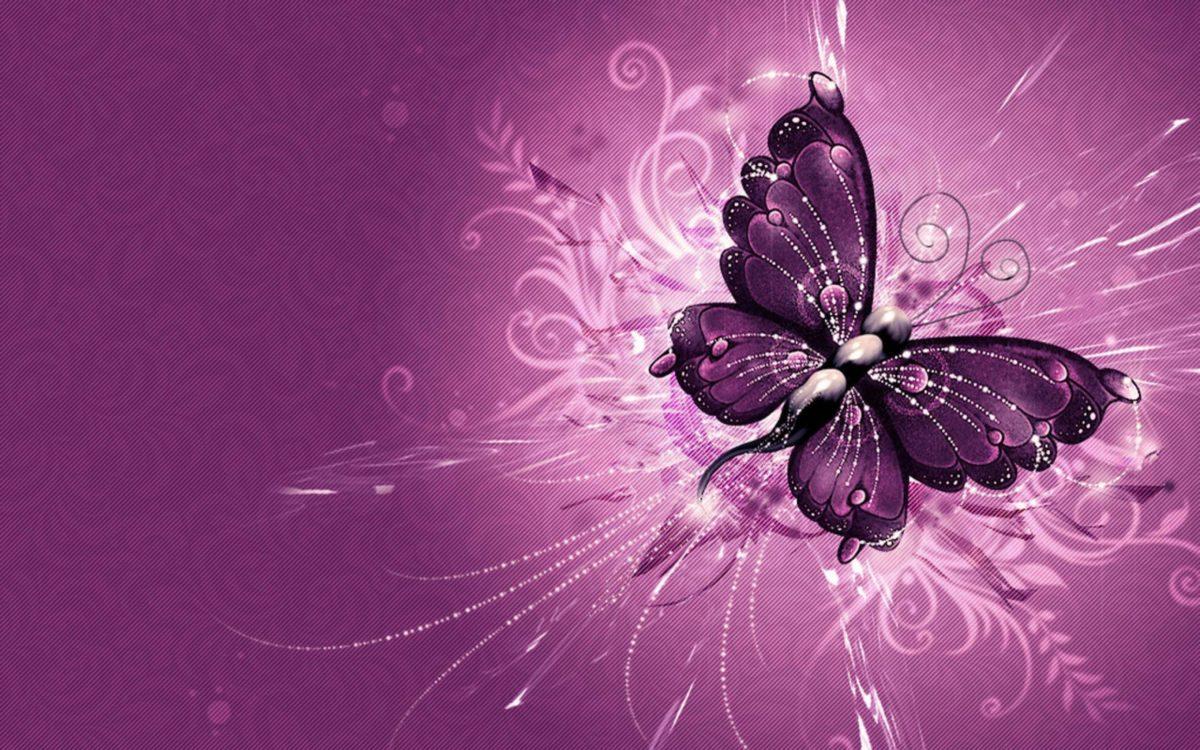 Purple Butterfly Wallpapers – Full HD wallpaper search