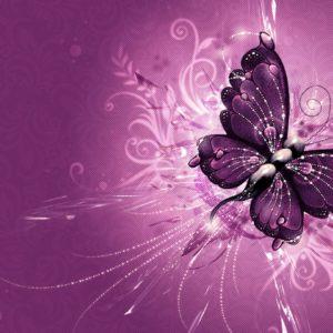 download Purple Butterfly Wallpapers – Full HD wallpaper search