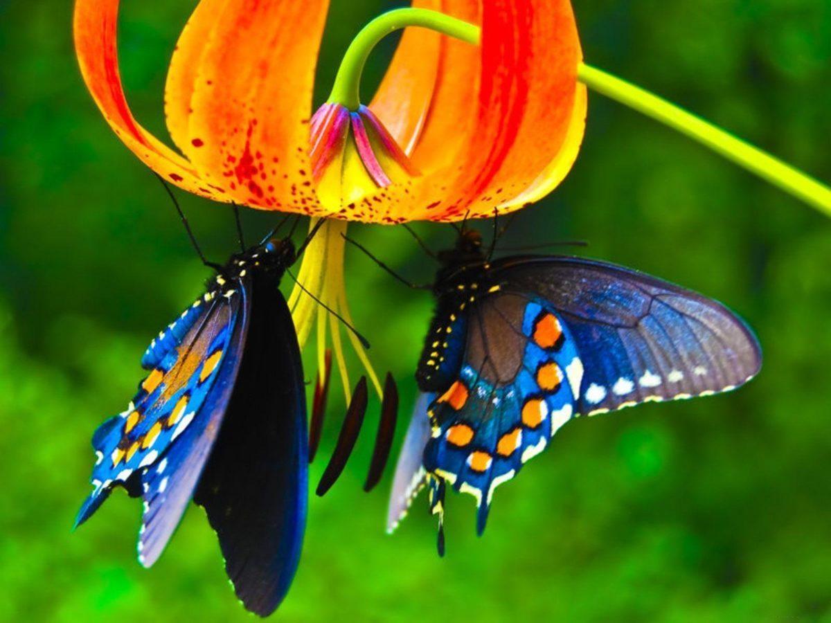 Butterflies HD Wallpapers – HD Wallpapers Inn