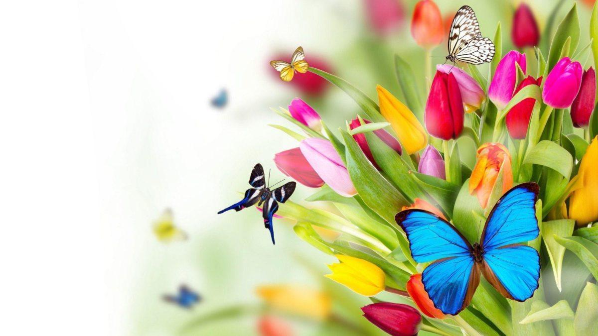 Butterflies Wallpaper | Large HD Wallpaper Database