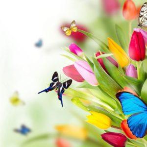 download Butterflies Wallpaper   Large HD Wallpaper Database