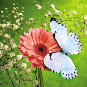 download Butterfly HD Wallpapers | Butterfly Desktop Images | Cool Wallpapers