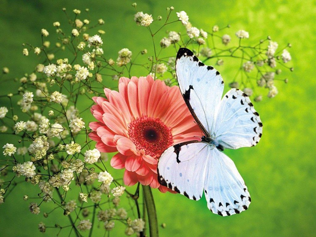Butterfly HD Wallpapers | Butterfly Desktop Images | Cool Wallpapers