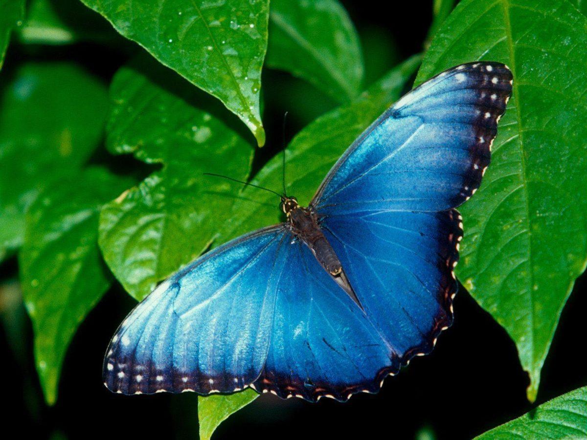 Butterfly Desktop Wallpaper | Butterfly Desktop Images | New …