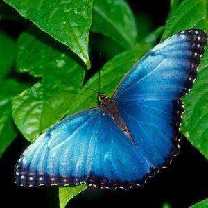 download Butterfly Desktop Wallpaper | Butterfly Desktop Images | New …