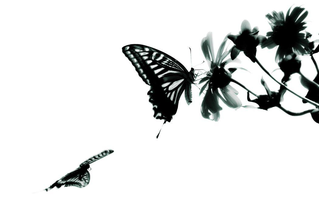 Wallpapers Butterfly