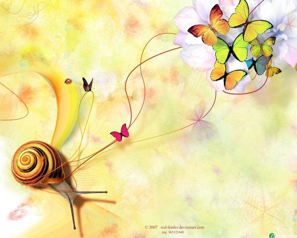 Snail & Butterflies Wallpaper Wallpapers – HD Wallpapers 35568