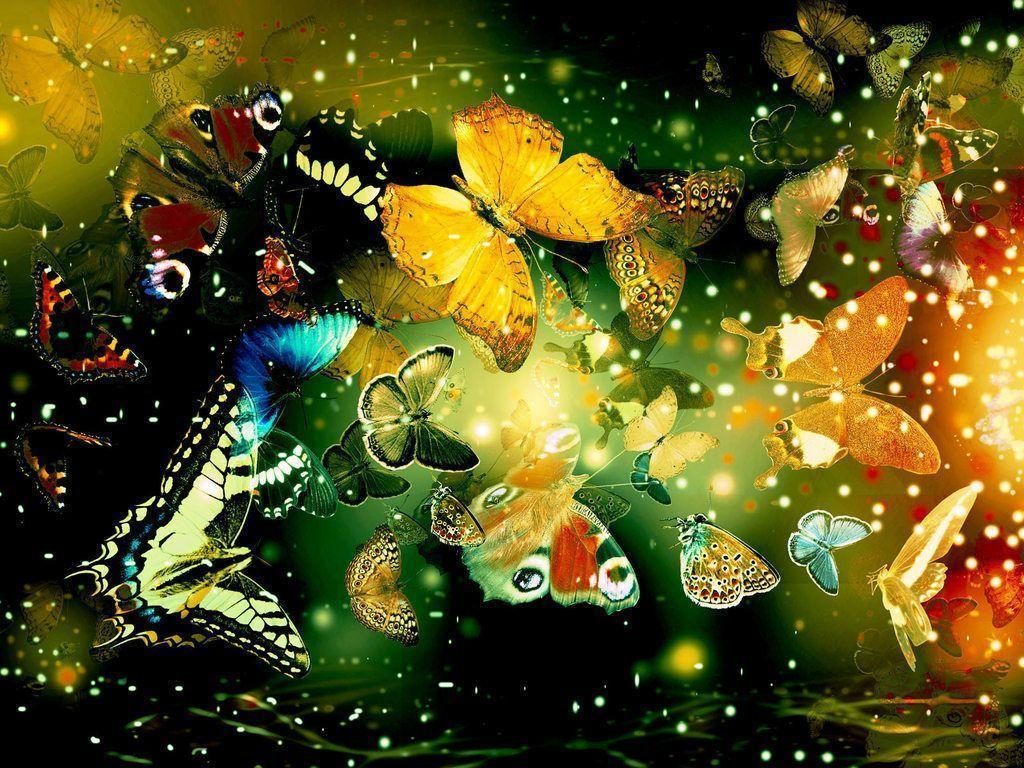 Best butterfly wallpapers free – Wallpapers Daddy