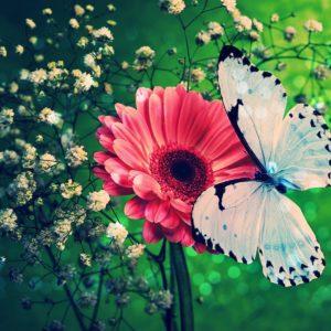 download Butterflies Wallpapers Download #17580) wallpaper – wallatar.