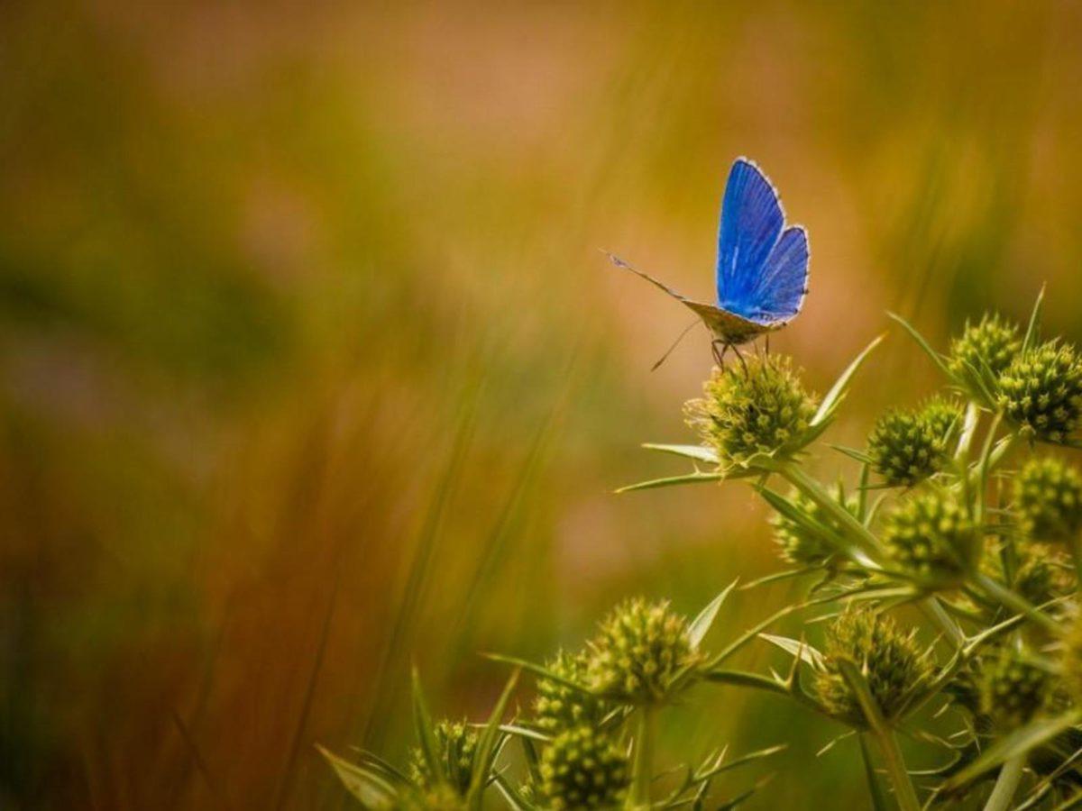 Beautiful Butterflies Wallpapers, Download Free Butterflies …