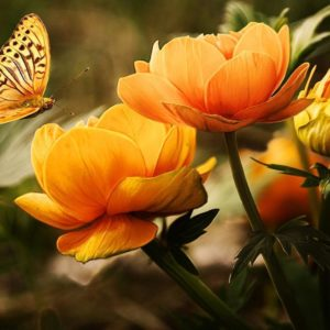 download Colorful Butterfly HD Wallpapers | Real & Artistic