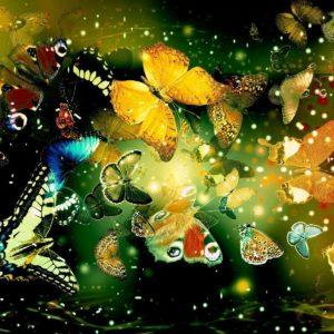 download Butterflies Hd Wallpapers | Wallpapers Top 10