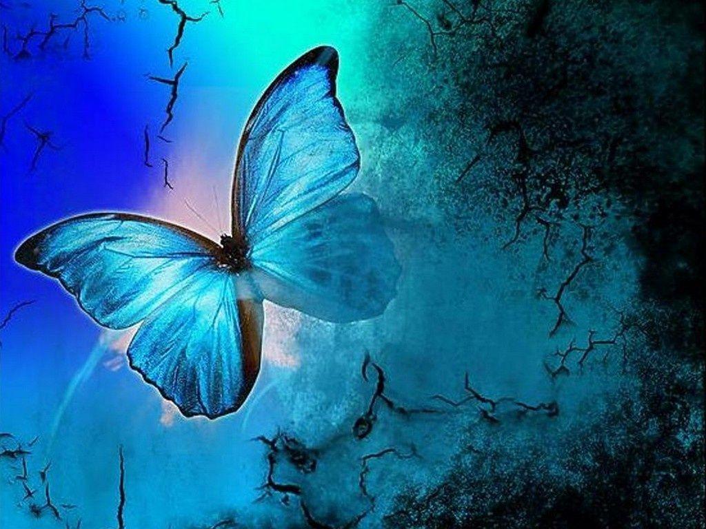 Butterflies Wallpapers 10021 HD Desktop Backgrounds and Widescreen …